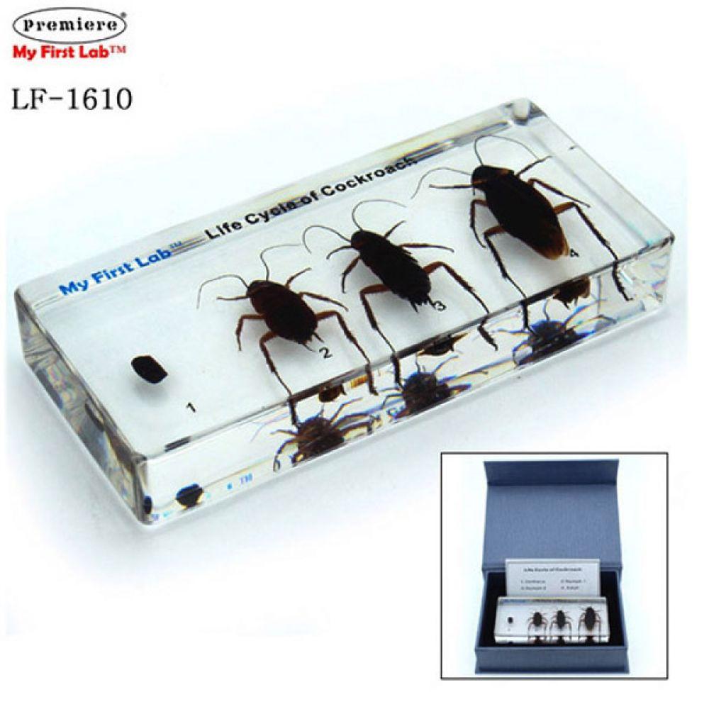 LF-1610 성장표본 바퀴벌레 과학 과학실험 과학교구 과학 학습교구 과학실험 과학실습 과학교구