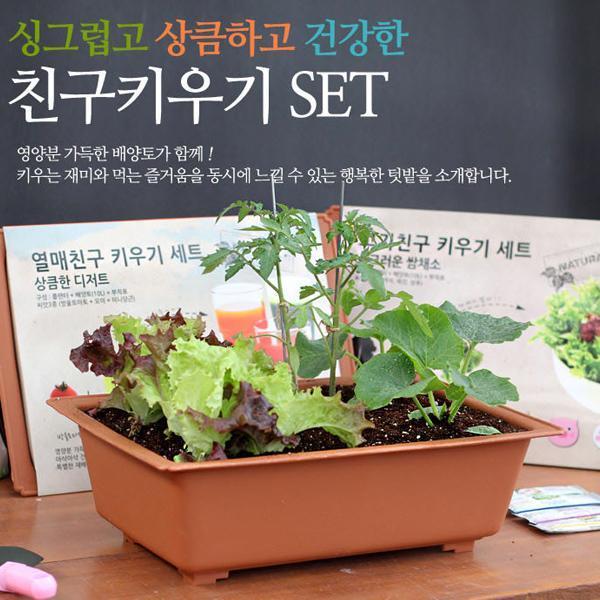 몽동닷컴 셀프 식물키우기 쉬운 채소키우기 세트 텃밭세트 새싹재배 미니화분 식물키우기 새싹키우기