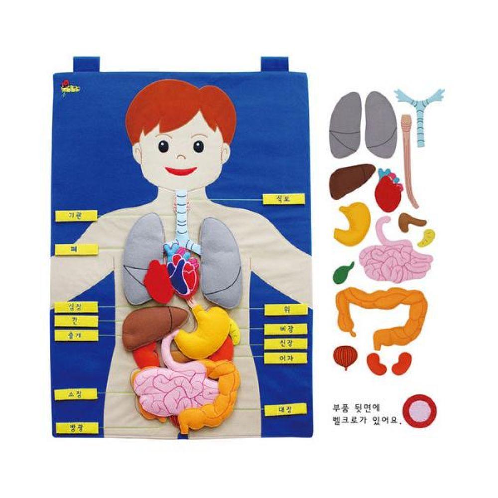 매직교구 탈부착 한글 신체기관 차트 완구 문구 장난감 어린이 캐릭터 학습 교구 교보재 인형 선물