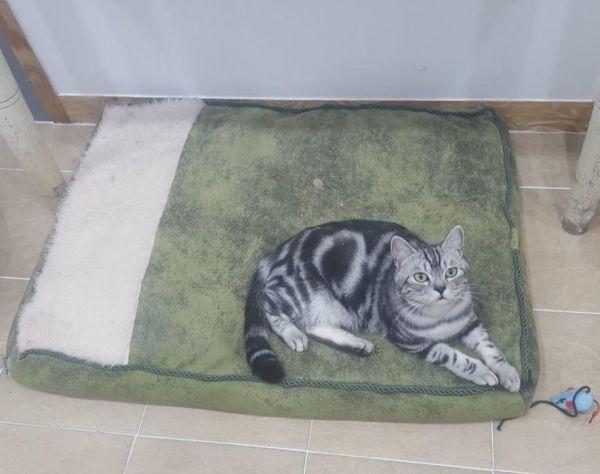 대형마약방석90x70cm(녹색) 애견방석 고양이방석 강아지방석 개방석 애견하우스