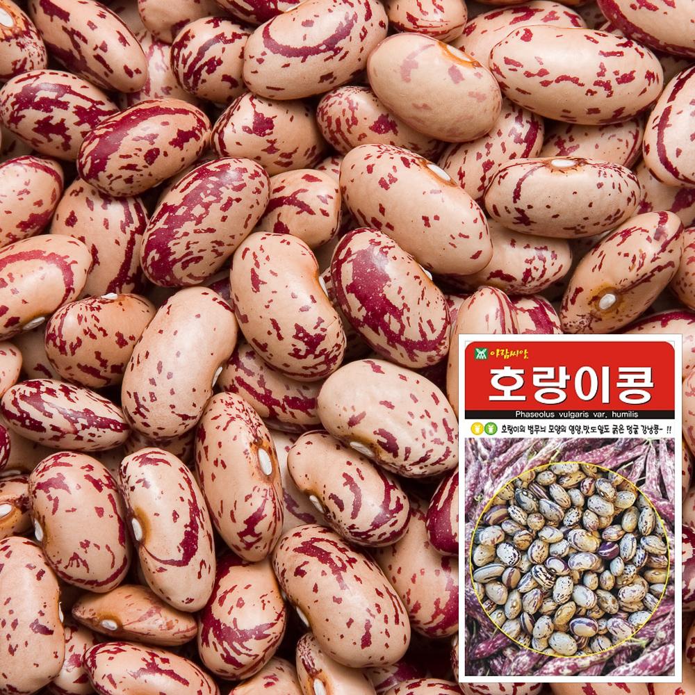 호랑이콩 씨앗 (30g)  채소씨앗 야채씨앗 완두콩씨앗 씨앗 잎채소 가지과 화분재배 과일씨앗 베란다텃밭 씨앗화분 씨앗키우기 채소씨앗 허브씨앗 새싹씨앗