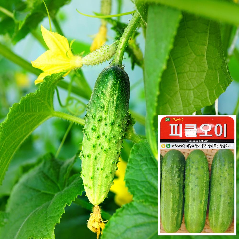 피클오이 씨앗 (50립)  채소씨앗 야채씨앗 배추씨앗 씨앗 잎채소 가지과 화분재배 과일씨앗 베란다텃밭 씨앗화분 씨앗키우기 채소씨앗 허브씨앗 새싹씨앗