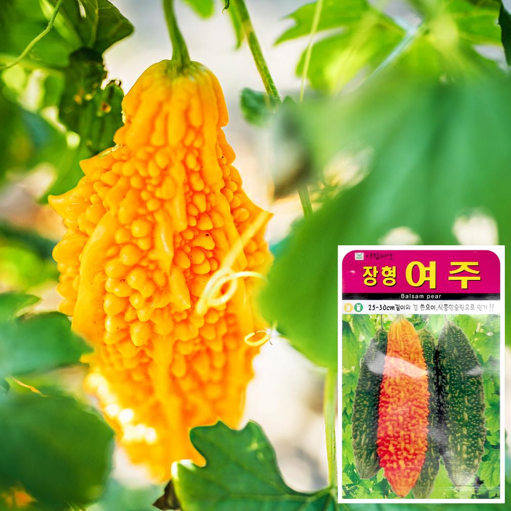 여주 씨앗 (10립)  채소씨앗 야채씨앗 배추씨앗 씨앗 잎채소 가지과 화분재배 과일씨앗 베란다텃밭 씨앗화분 씨앗키우기 채소씨앗 허브씨앗 새싹씨앗