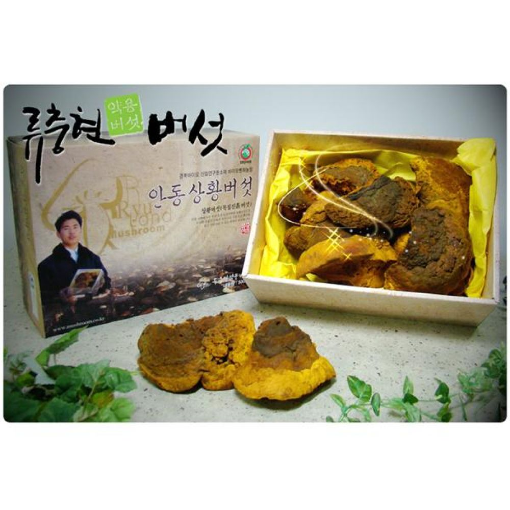 류충현 상황버섯(상품) 1kg 건강 식품 버섯 선물 상황