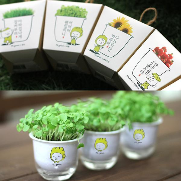 몽동닷컴 셀프 식물키우기 책상 미니화분 캣잎 텃밭세트 새싹재배 미니화분 식물키우기 새싹키우기