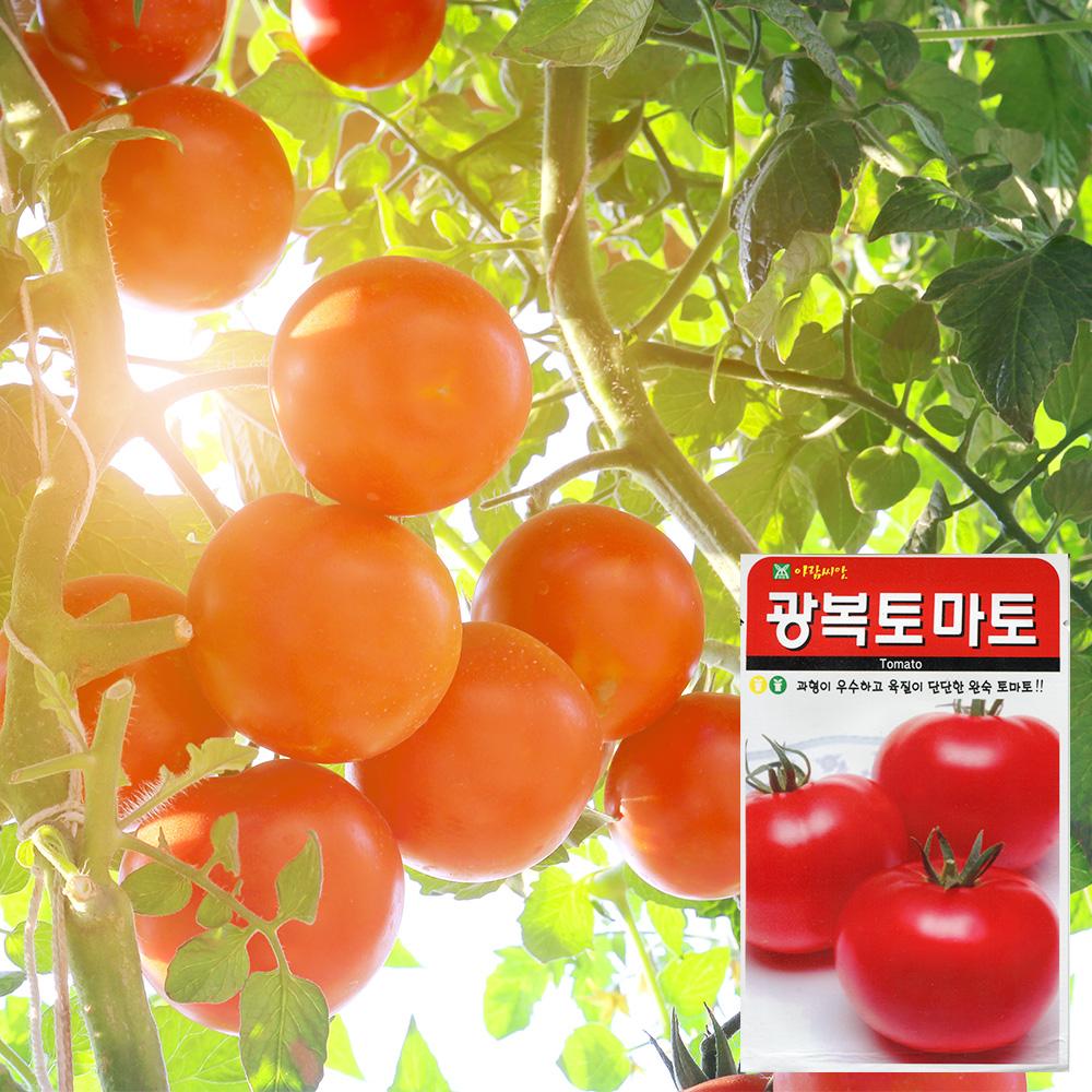 광복토마토 씨앗 (100립)  토마토씨앗 과일씨앗 수박 씨앗 잎채소 가지과 화분재배 토마토씨앗 씨앗키우기 텃밭세트 씨앗세트 베란다텃밭 분갈이흙 씨앗배양토 식물영양제 화분