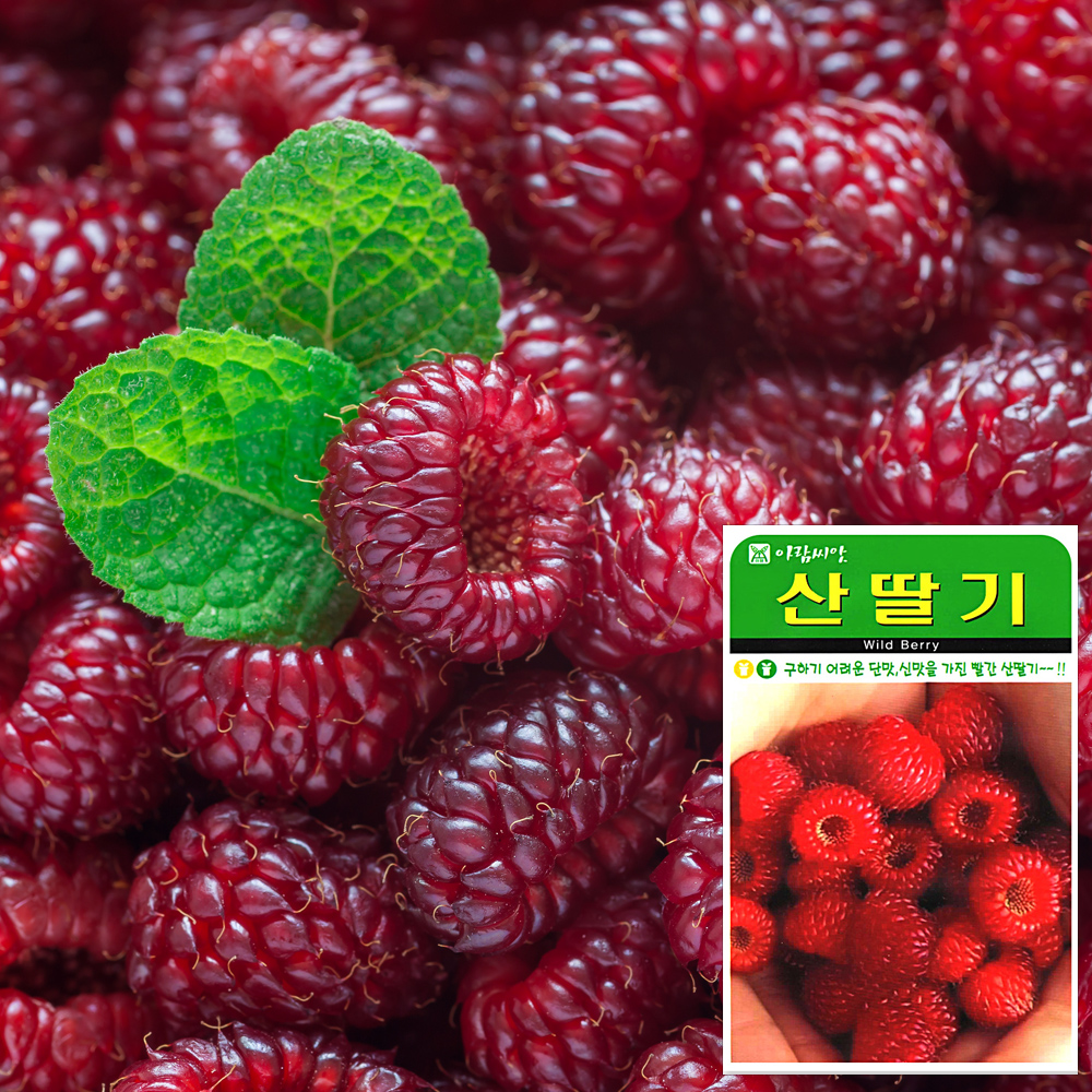 산딸기 씨앗 (100립)  채소씨앗 과일씨앗 딸기 참외 씨앗 잎채소 가지과 화분재배 과일씨앗 베란다텃밭 씨앗화분 씨앗키우기 채소씨앗 허브씨앗 새싹씨앗