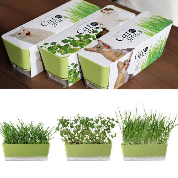 몽동닷컴 고양이가 좋아하는 식물 기르기 스트레스완화 텃밭세트 새싹재배 미니화분 식물키우기 새싹키우기
