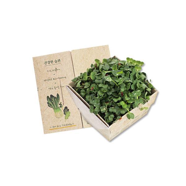 몽동닷컴 셀프 식물키우기 쉬운 새싹채소 텃밭세트 새싹재배 미니화분 식물키우기 새싹키우기