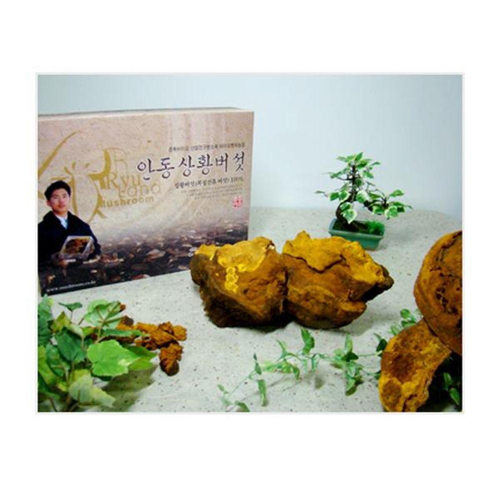 류충현 상황버섯(우수상품) 1kg 건강 식품 버섯 선물 상황