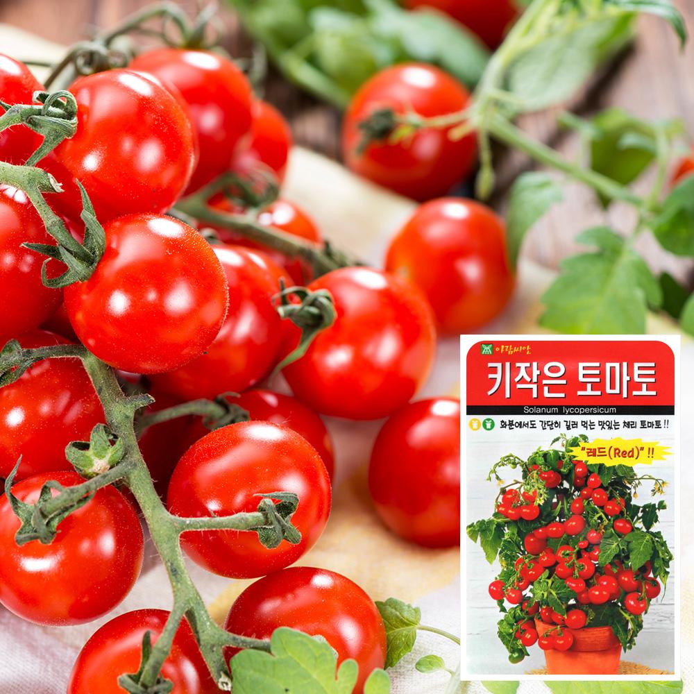 키작은 토마토 씨앗 (50립)  토마토씨앗 방울토마토 씨앗 잎채소 가지과 화분재배 과일씨앗 베란다텃밭 씨앗화분 씨앗키우기 채소씨앗