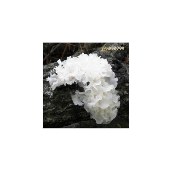 동의한약나라 백목이버섯/흰목이버섯 200g 동의한약나라 백목이버섯 흰목이버섯 백목이 흰목이 버섯